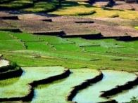 riziere-sonde