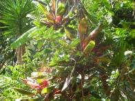 isla-verde-hotel-ecologique-jardins06
