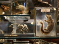 grant-museum-zoology-houses-collection-20120904-070442-572
