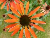 parc-botanique-haute-bretagne-jardins-crepuscule-03