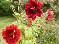 parc-botanique-haute-bretagne-jardins-crepuscule-07