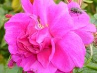 parc-botanique-haute-bretagne-jardins-crepuscule-09