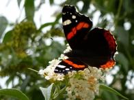 parc-botanique-haute-bretagne-jardins-romantiques-17