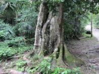 voyage-guatemala-guatemala-photos-tikal-12-jpg