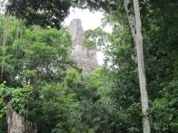 voyage-guatemala-guatemala-photos-tikal-17-jpg