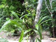 voyage-guatemala-posada-del-cerro-09-orchidees-jpg