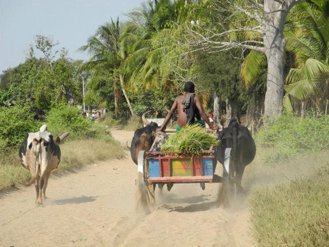 Prendre le temps de la découverte et de la rencontre! Déplacement en transports locaux à Madagascar.