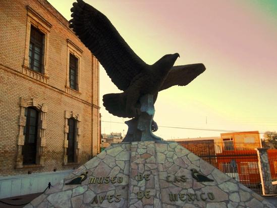 Musée des oiseaux au Mexique