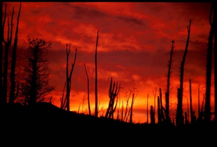 http://www.voyageurs-du-net.com/wp-content/uploads/2012/09/mexique-insolite-cirios-de-fuego2-700x474.jpg
