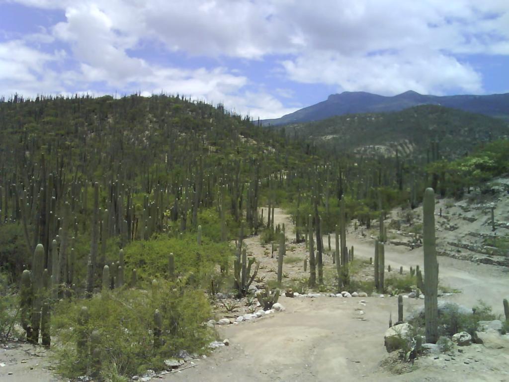 Cactus de Zapotitlan