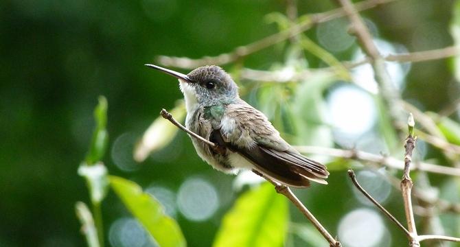 http://www.voyageurs-du-net.com/wp-content/uploads/2012/10/azure-crowned-hummingbird-une.jpg