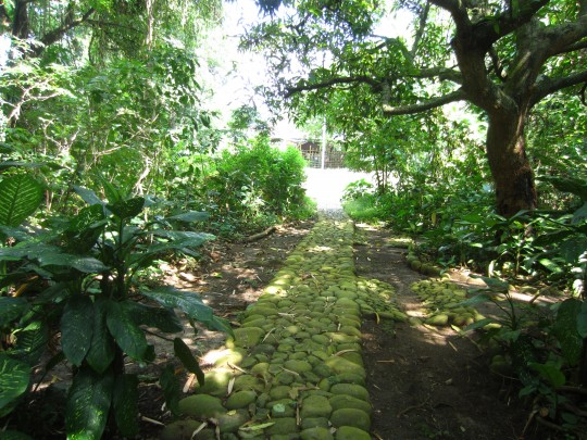 Dans la forêt de Coatepeque