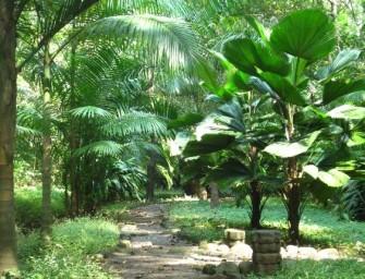 A Coatepeque, une association transforme une décharge en forêt tropicale