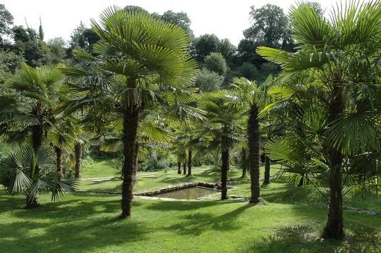 La palmeraie (Thierry Jeandot)