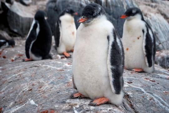 Antarctique_3©AnneRecoules