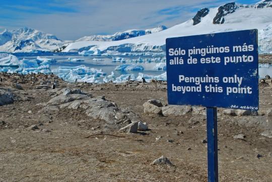 Antarctique_7©AnneRecoules