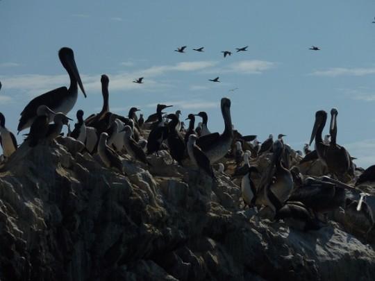 Les milliers d'espèces de la réserve visitée chaque matin et après midi