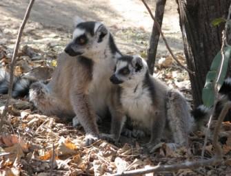 Écotourisme à Madagascar: quand l'environnement contribue au développement communautaire