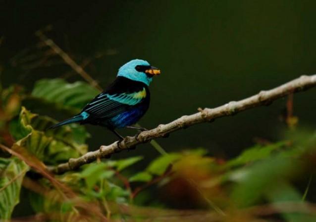 Santa Lucia en Equateur, 400 espèces d'oiseaux