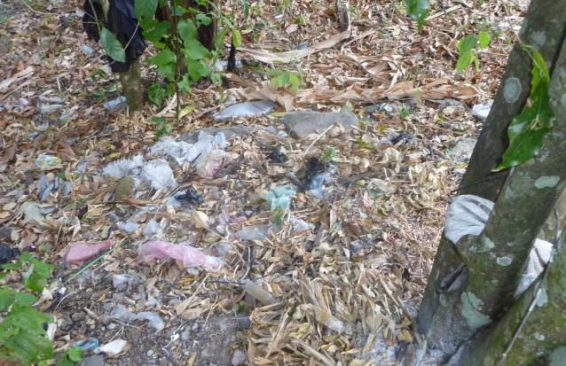 A quelques dizaines de mètres de la rive du lac Atitlán (Guatémala), un bosquet jonché de détritus charriés par la dernière pluie.