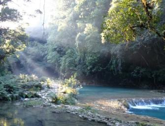 Des piscines naturelles turquoises au cœur de la forêt : Semuc Champey
