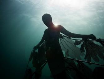 « Un art propice à la vie marine» : les musées sous-marins de Jason deCaires Taylor