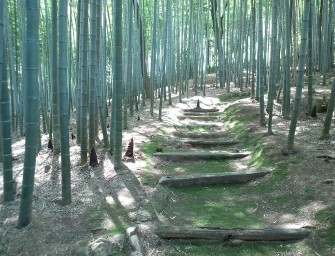 foret-bambou-japon-insolite-kyoto-sangano-04Yanajin33