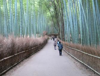 foret-bambou-japon-insolite-kyoto-sangano-07
