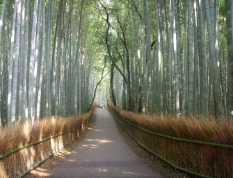 foret-bambou-japon-insolite-kyoto-sangano-0Sailko