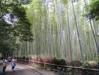 foret-bambou-japon-insolite-kyoto-sangano-11-Daderot