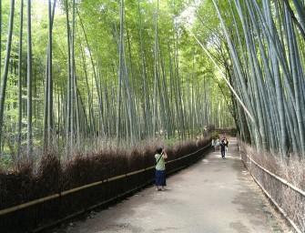 foret-bambou-japon-insolite-kyoto-sangano-Daderot