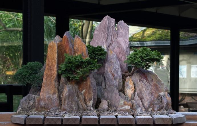 Dinkum-Bonsai_-_Parc_Floral