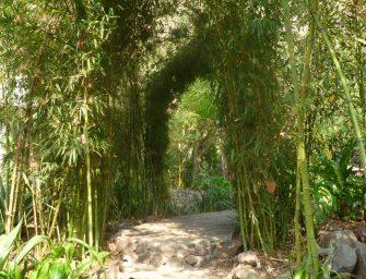 Lac Atitlan : la Isla Verde, hôtel écologique (02). Crédit : Mikaël Faujour