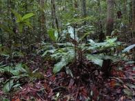 gunung-mulu-borneo-malaisie-visiter-08-jpg