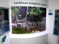 03-mangrove-caribeenne