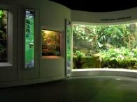 jungle-iwokrama