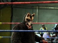 lucha-libre-cholita-wrestling-catch-feminin-la-paz-bolivie-16