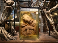 grant-museum-zoology-houses-collection-20120904-070442-302