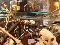 primateskeletons