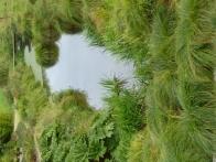 parc-botanique-haute-bretagne-jardins-crepuscule-06