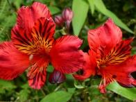 parc-botanique-haute-bretagne-jardins-romantiques-05
