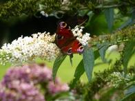 parc-botanique-haute-bretagne-jardins-romantiques-08