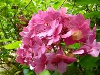 parc-botanique-haute-bretagne-jardins-romantiques-09
