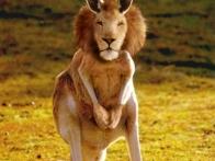 kangoulion