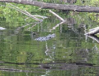 La Ventanilla : tourisme communautaire et écolo dans la lagune aux crocodiles