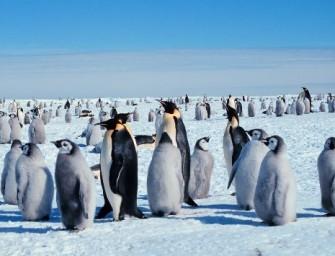 «Unis pour un tourisme alternatif» : VDN interpelle la blogosphère