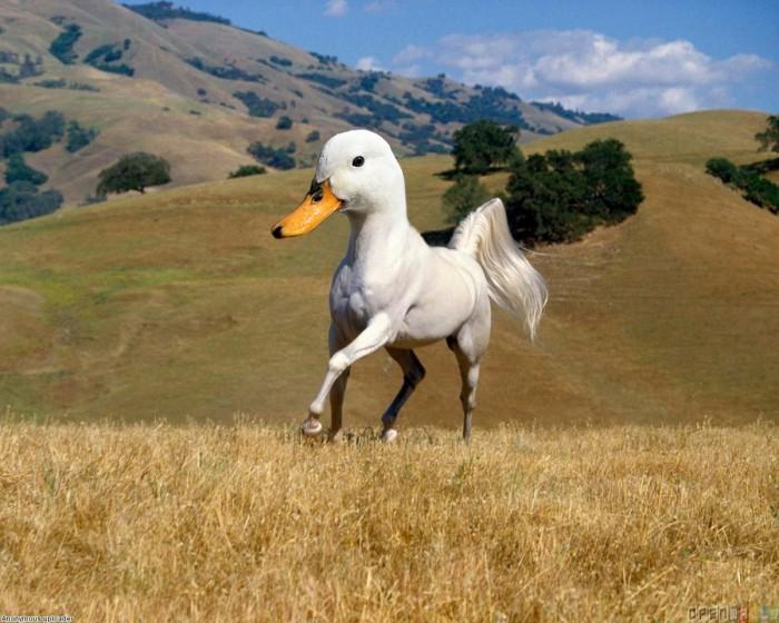 https://www.voyageurs-du-net.com/wp-content/uploads/2013/04/animaux-hybrides-safari-insolite-mexique-chevanard-700x560.jpg