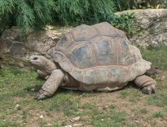 Île Moyenne : plus petit parc national du monde et paradis de la tortue des Seychelles