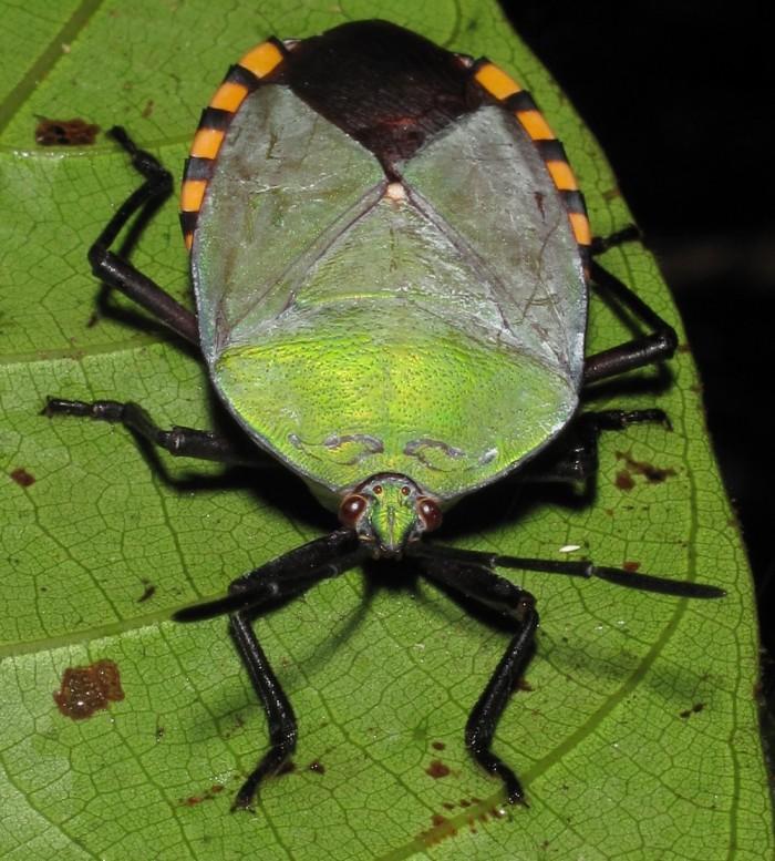 https://www.voyageurs-du-net.com/wp-content/uploads/2013/08/gunung-mulu-borneo-malaisie-visiter-01-700x777.jpg