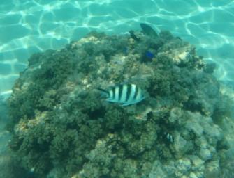 La Grande Barrière de corail, monument naturel en péril
